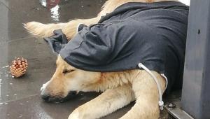 Yağmurda köpeğin üzerine hırka örttüler
