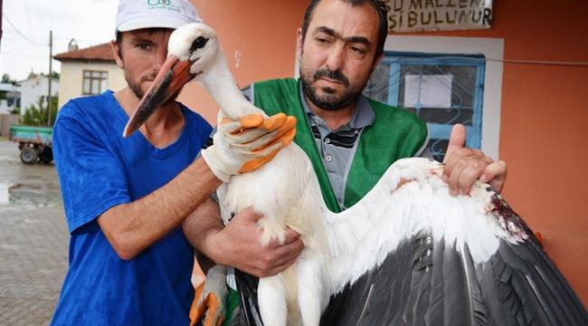 Yuvasından Düşen Leylek Bünyan Belediyesine Emanet!