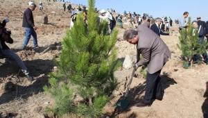 Bugün Kayseri'de 487 bin 500 fidan toprakla buluşturuldu!