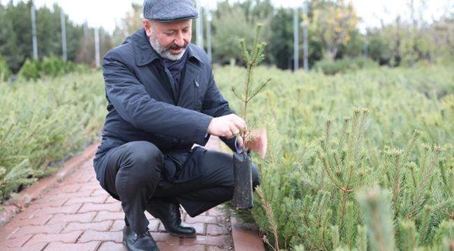 Kayseri Kocasinan Belediyesi'nde hedef; 100 Bin Ağaç Dikmek!