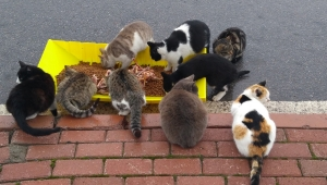 Kayseri Kocasinan Belediyesi Her zaman Yaptığı Gibi Sokak Hayvanlarını Unutmadı