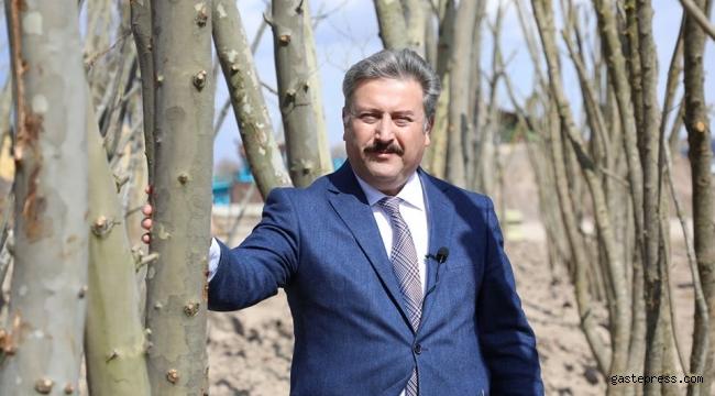 Kayseri Melikgazi Belediyesi, Fidan Değil Ağaç Dikiyoruz.