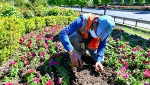 Ankara Büyükşehir Belediyesi, mevsimlik çiçek dikim çalışmalarını hızlandırdı.