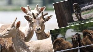 Kayseri Büyükşehir Belediyesi Hayvanat Bahçesi kapılarını ziyaretçilerine açıyor.