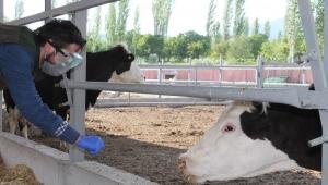Koronavirüse yakalanan çiftçiye Tarım ve Orman Müdürlüğü'nden destek