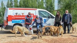 Ankara Büyükşehir Sokak Canları İçin Ara Vermeden Besleme Çalışması Yaptı