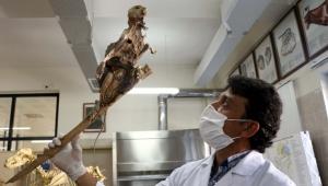 Evin bodrumunda bulunan hayvan iskeleti, sansara ait çıktı