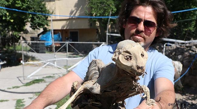 Evin bodrumunda odun ararken hayvan iskeleti buldu