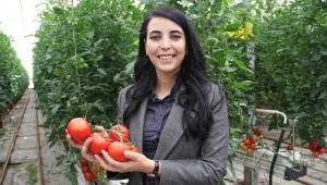 Katı atıktan depolama tesisinde gübre, domates ve elektrik üretiliyor