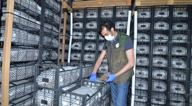 Kayseri'den 6 ülkeye çilek fidesi ihracı