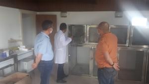 Sultan Sazlığı'nda yaralanan hayvanlar yerinde tedavi edilecek