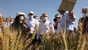 """Başkan Büyükkılıç, Bünyan'da """"Yerli ve Milli Tohum"""" projesi kapsamında """"Tarla Günü"""" etkinliğine katıldı."""