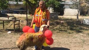 Fanatik Kayserisporlu taraftar adamış olduğu adağı kesti!