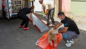 İzmir'de Sokak hayvanlarına acil müdahale aracı beşe çıkarıldı
