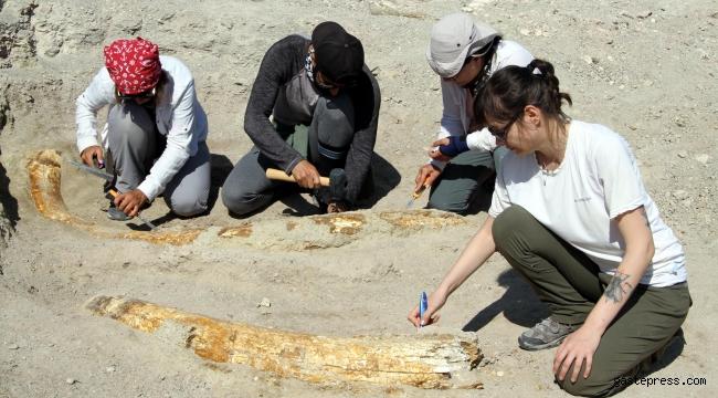Kayseri'de kazı çalışmaları yeniden başladı; 7,5 milyon yıllık 2 fosil daha bulundu!