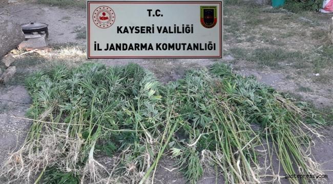 Kayseri'de bir evin bahçesinde, 236 kök Hint keneviri ele geçirildi!
