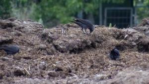 İstanbul'da kuşlarda Batı Nil Virüsü saptandı; Prof. Dr. Yılmaz uyardı!