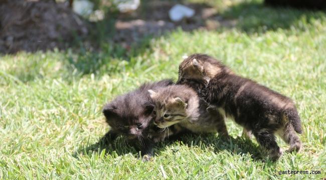 Kayseri Yahyalı Belediyesi annesiz kalan yavru kedilere sahip çıktı!